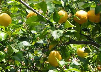 citronlunden