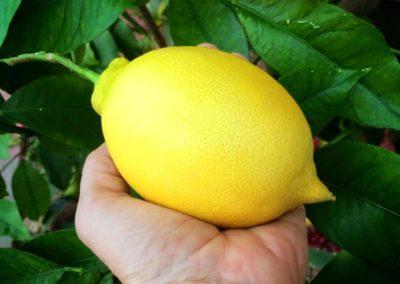 Citron_uppgrenna_naturhus